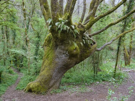 Remarkable Tree of Puits d Enfer